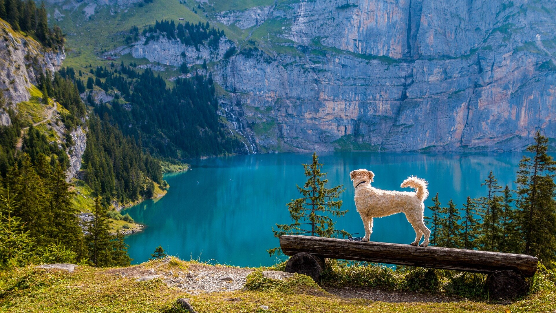Dog overlooking mountainside lake