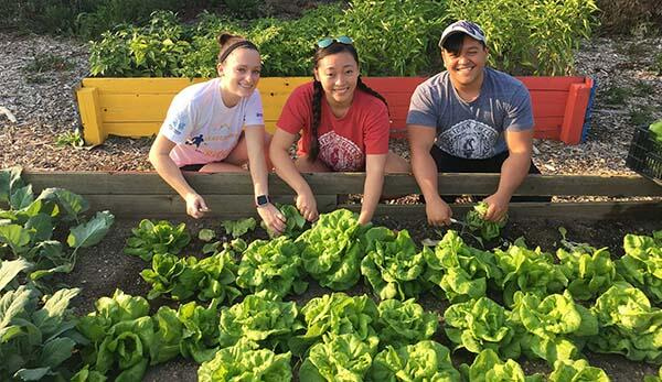 American College of Education staff volunteering at a local community garden